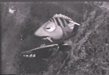trigger-baron-barracuda